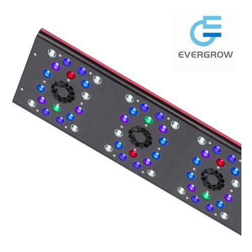 Éclairage LED Evergrow